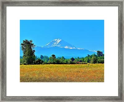 Bovine View Of Mt. Rainier Framed Print