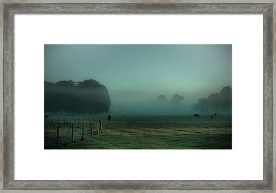Bovines In The Mist Framed Print by Chris Fletcher