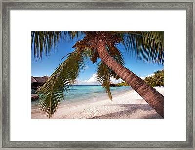 Bowed Palm Framed Print by Jenny Rainbow
