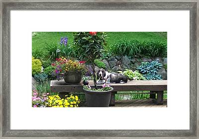 Bowie In The Garden Framed Print