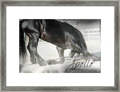 Bowing Before A Queen Framed Print