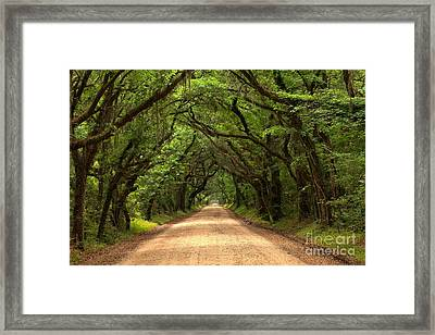 Bowing Oak Trees Framed Print by Adam Jewell