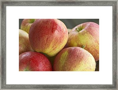 Bowl Of Royal Gala Apples Framed Print by Sharon Talson