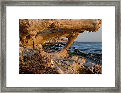 Bowling Ball Beach Framed In Driftwood Framed Print by Patricia Sanders