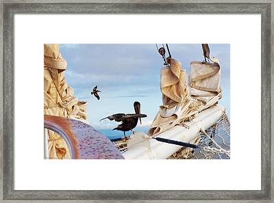 Bowsprit Pelicans Framed Print by Deborah Smith
