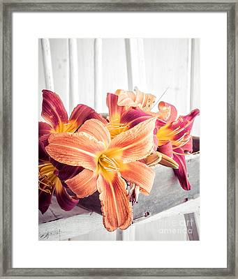 Box Of Day-lily  Framed Print