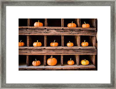 Boxed In Pumpkins Framed Print by Dawn Romine