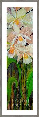 Boxed Orchids Framed Print