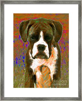 Boxer 20130126v1 Framed Print by Wingsdomain Art and Photography
