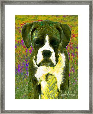Boxer 20130126v2 Framed Print by Wingsdomain Art and Photography