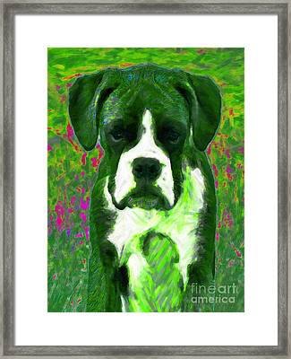 Boxer 20130126v3 Framed Print by Wingsdomain Art and Photography