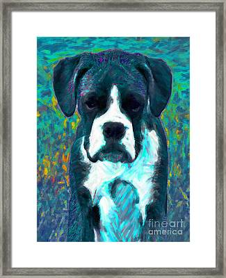 Boxer 20130126v4 Framed Print by Wingsdomain Art and Photography