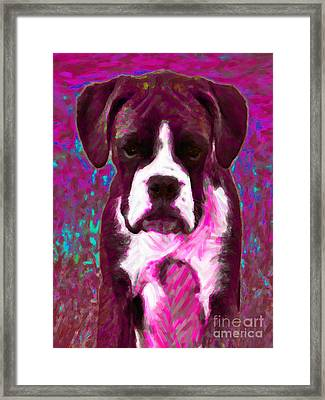 Boxer 20130126v7 Framed Print by Wingsdomain Art and Photography