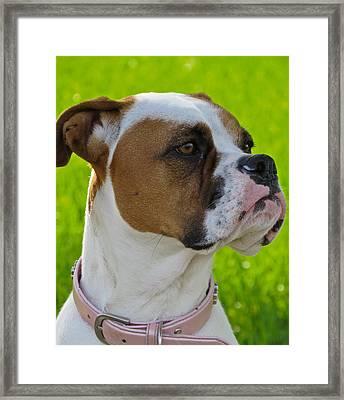 Boxer Babe Framed Print by Ella Kaye Dickey