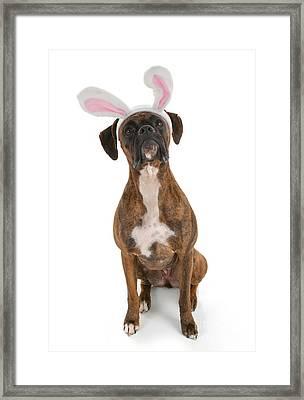 Boxer Bunny Framed Print by Suzi Nelson