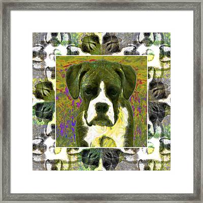 Boxer Dog 20130126 Framed Print by Wingsdomain Art and Photography