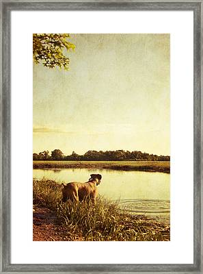 Boxer Dog By The Pond At Sunset Framed Print by Stephanie McDowell