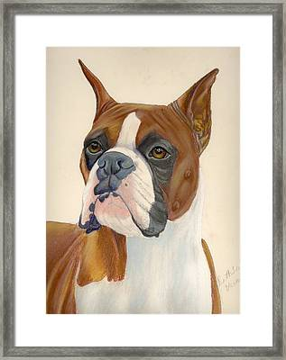 Boxer Dog Framed Print by Ruth Seal