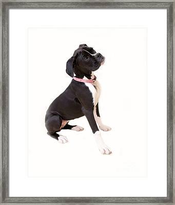 Boxer Girl 1 Framed Print