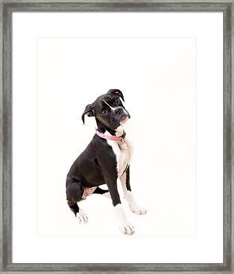 Boxer Girl 2 Framed Print