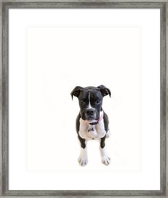 Boxer Girl 3 Framed Print