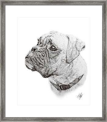 Boxer Framed Print by Hannah Taylor