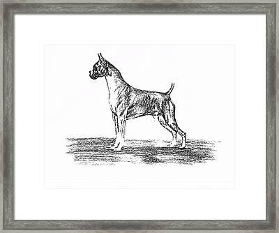 Boxer Framed Print by Joann Renner