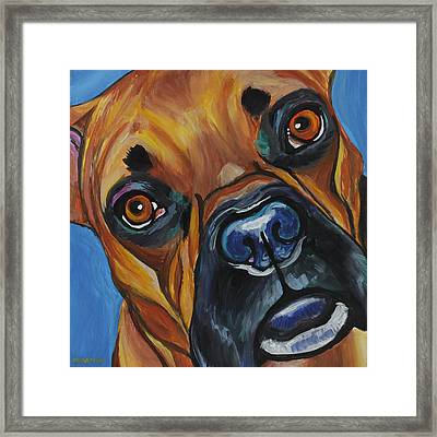Boxer Framed Print by Melissa Smith