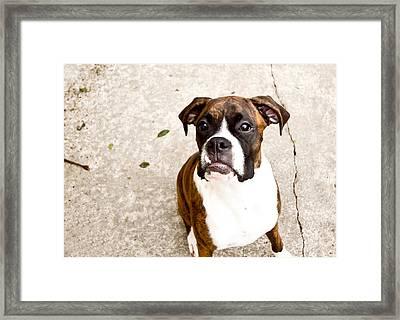 Boxer Framed Print by Paulina Szajek