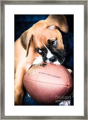 Boxer Puppy Cuteness Framed Print