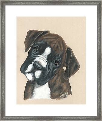 Boxer Puppy Framed Print by Daniele Trottier