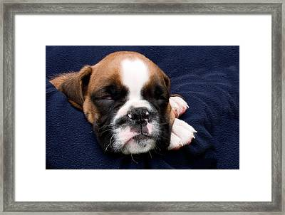 Boxer Puppy Sleeping Framed Print