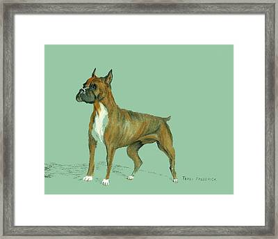 Boxer Framed Print by Terry Frederick