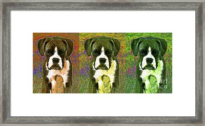 Boxer Three 20130126 Framed Print by Wingsdomain Art and Photography