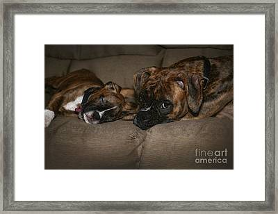 Boxers At Rest Framed Print by Suzi Nelson