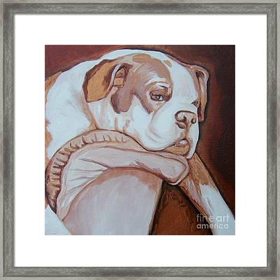 Boxer's Day Off Framed Print by Holly Picano