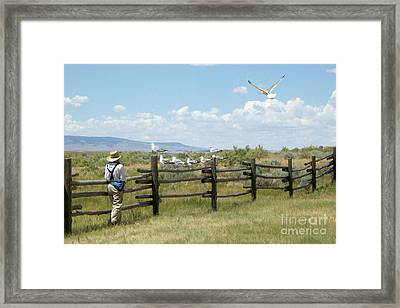 Boy And Seagulls Framed Print by Cindy Singleton