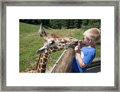Boy Feeding Giraffe Framed Print by Jim West