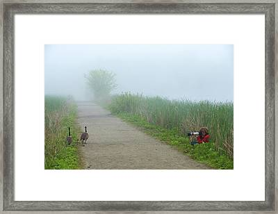 Boy Photographing A Pair Of Geese Framed Print