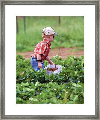 Boy Picking Strawberries - Oil Painting Framed Print