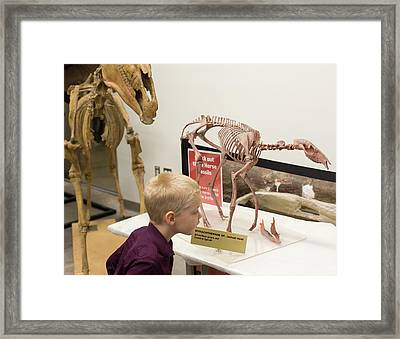 Boy With Ancestral Horse Fossil Framed Print by Jim West