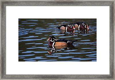 Boys Night Out Framed Print by Skip Willits