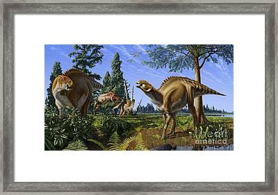 Brachylophosaurus Canadensis Framed Print