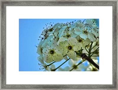Bradford Pear I Framed Print