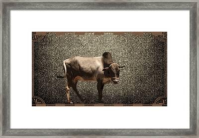 Braham Framed Print by Sherry Gombert