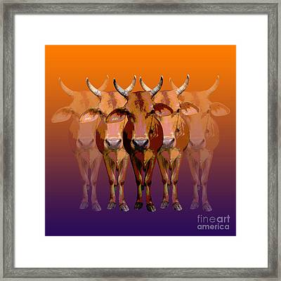 Brahman Cow Framed Print by Jean luc Comperat
