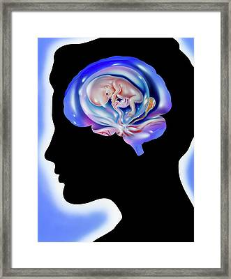 Brain And Pregnancy Framed Print