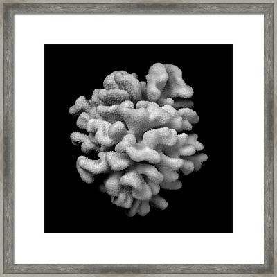 Brain Coral Framed Print by Jim Hughes