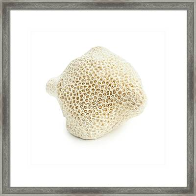 Brain Coral Framed Print by Science Photo Library