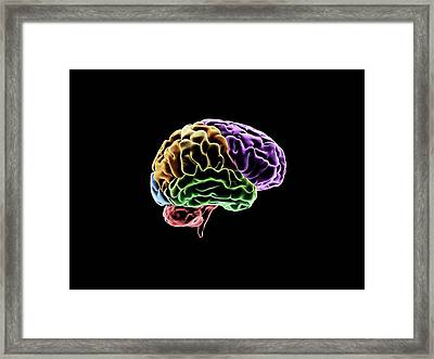 Brain Framed Print by Sci-comm Studios